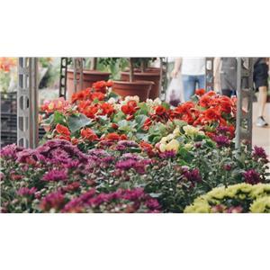 Garden y floristeria